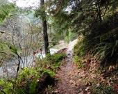Brice Creek Trail, In Oregon, DIGITAL DOWNLOAD, hiking trail decor, forest trail, trail along creek, wooded decor, fine art photography