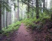Along Eagles Rest Trail, DIGITAL DOWNLOAD, forest path decor, hiking trail decor, forest decor ,hiking path decor, fine art photography