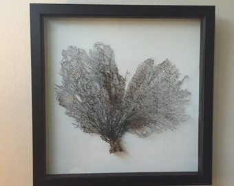 Large Framed Sea Fan Coral