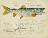 "Lake Trout - 8""x10"" limited edition print by Matt Patterson, trout print, adirondack decor, fly fishing art, cabin decor"
