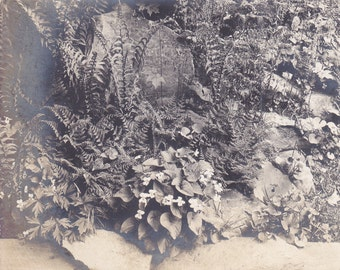 Antique Snapshot Photo of a Beautiful Garden Full of Flowers, Great For Botany !!!
