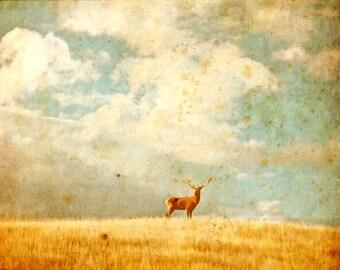 VINTAGE STAG - landscape photography, grassland, wilderness, deer, whimsy, vintage, rustic, art photography, skehan, vintage photo print