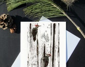 Karri Jamison 1 GREETING CARD, Title: Pileated Woodpeckers on Decaying Birch, on paper 5x7 inches
