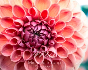 Flower Photography, Botanical Prints, Macro Photography, Pink, Flower, Botanic Photography, Nature Photography, Garden Prints, Pink Flower