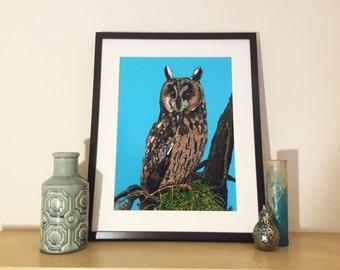 Long Eared Owl Portrait