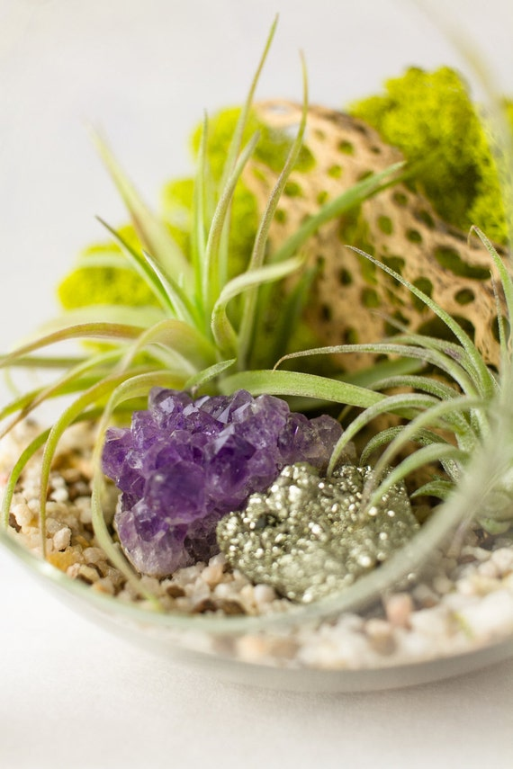 Amethyst Cluster and Pyrite Air Plant Terrarium Kit || Gifts for the Naturalist || Large Round Hanging