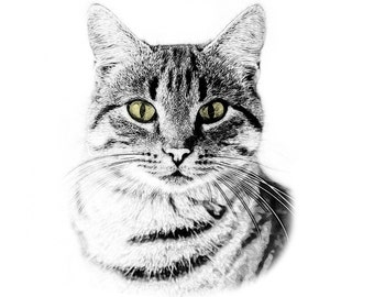 Tabby Cat Portrait - Custom Pet Portrait - Digital Sketch - Custom Pet Art - Custom Artwork - Cat lover art - cat sketch portrait