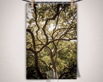 Tree Branches Photo Crazy Winding Outdoor Nature Forest Photography Tree Art Print