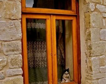 House Cat, Tbilisi, Georgia