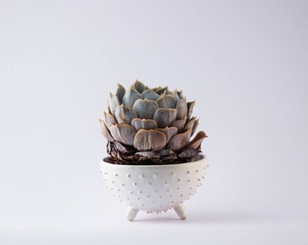 Handmade spiky ceramic succulent planter/ white flower pot/ air planter/ 3 leeged planter