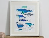 Wonderful Whales of the World. New Edition by Faye Bradley