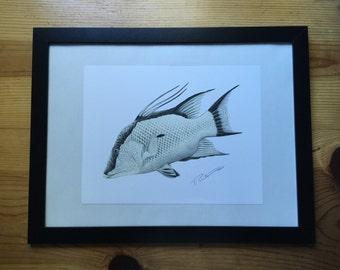 Hog fish art – Etsy