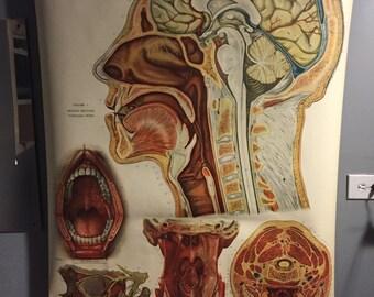 1918 Vintage medical chart