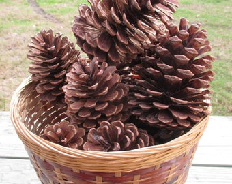 Ten Virginia Pine Cones