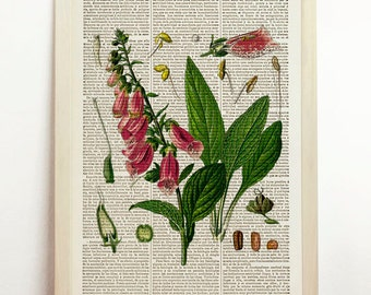 Digitalis Purpurea Poster Chart Foxglove Botanical Illustration Purple Green Print Grain Plant Decor Upcycled Decor Art Book Dictionary
