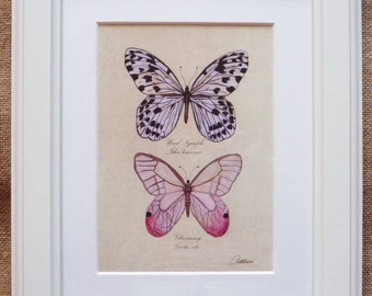Butterfly Framed,  Butterfly Picture, Butterfly Painting, Butterfly Print,  Butterfly gift - One of three designs in a 'Collection' series,
