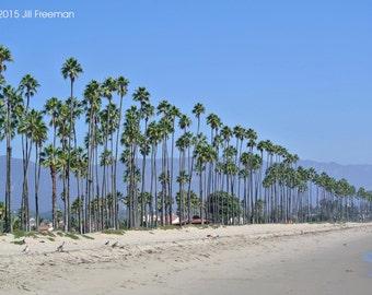 Santa Barbara, Palm Tree Print, California Print - Photo Print