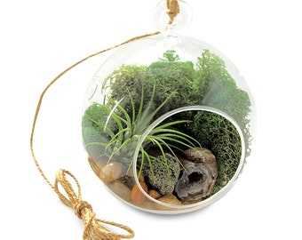 Air Plant Terrarium Kit with Pyrite and Geode - Hanging Terrarium - Geode Crystal Plant - Hematite Sand - Geologist Gift -  Glass Globe