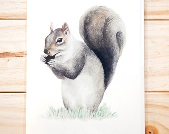 Squirrel CARD (3-pack)