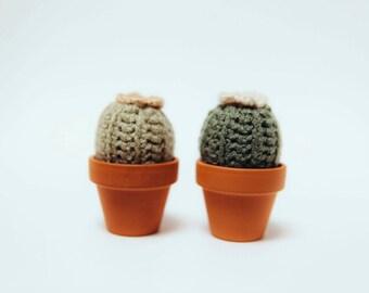 Cactus in Terra Cotta Pot