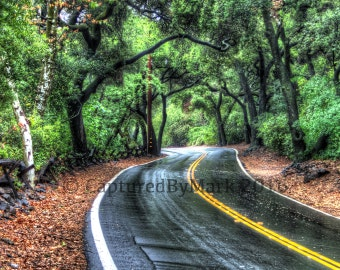 Rainy Forest Road, Winding Road - Fine Art Photographic Print