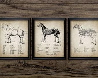 Vintage Horse Anatomy Print Set Of 3 - Horse Anatomy Illustration - Equestrian Printable Art - Set Of Three Prints #684 - INSTANT DOWNLOAD