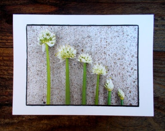SALE Nature Greeting Card. Blank Greeting Card. Note Card.