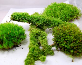 Live moss mix. Terrarium moss, vivarium moss, for miniature or fairy garden, terrarium plant, live decor, vivarium plant, for frogs,