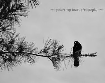 Curious Black Bird - Floral Art Print - Wall Decor- Photograph  - 5x7/8x10/11x14