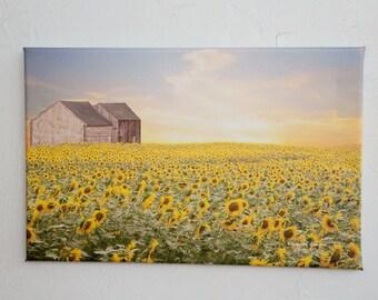 Sunflower Field Farm Original Photograph and Canvas