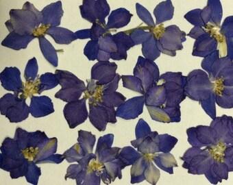 Blue Larkspur Pressed flower craft supplies, preserved flowers, woodland botanical Pressed leaves pressed petals oshibana supplies