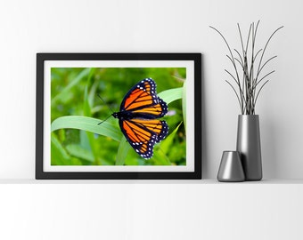 Monarch Butterfly Photograph, Spring Green Garden Art for Home Decor, Fine Art Print, Nature Wall Art
