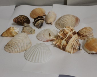 SALE: Whole Vintage Sea Shells, Look Carefully at Them,  in All, Includes Coral, 12 Almost Perfect, Nautical Decoration, Collectible, NICE