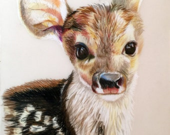 Bambi - Colored Pencil Drawing of Cute Deer 4x6 in Wall Decoration