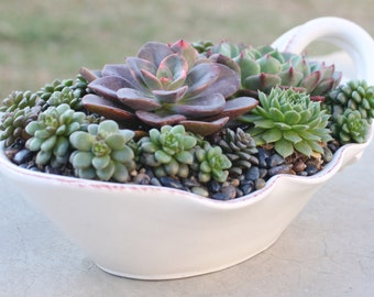 Succulent Arrangement in Italian Stoneware Bowl, Centerpiece, Hens and Chicks