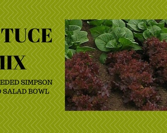 Heirloom Lettuce Seeds Red Salad Bowl
