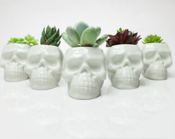Wedding Favors / Skull Planter with Succulents / 30 pieces