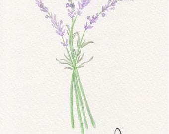Herb Set: Lavender