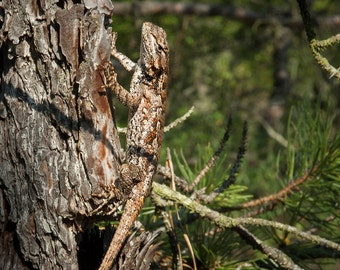 Photos of the New Jersey Pine Barrens blank notecard, lizard, individual card