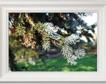 Blue Spruce Prints, Spruce Tree, Nature Prints, Nature Printables, Nature Artwork, Nature Art, Nature Wall Art, Nature Wall Decor