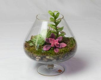 Hand-blown Succulent Terrarium