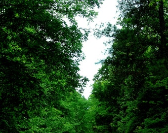 Into the woods, nature photography, print photo, home decor, car, forest