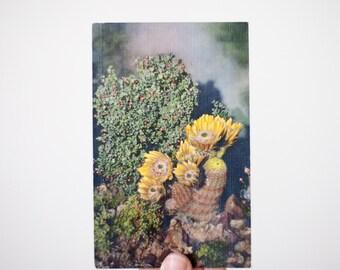 Vintage Desert Flower Postcard