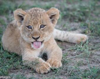 Cute Lion Cub 1