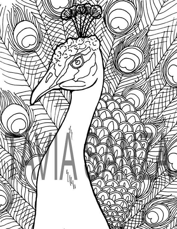 peacock coloring book page male india blue peacock - Peacock Coloring Book