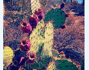 Colorpop.Cactus.WhiteTanks