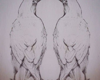 Dual Ravens