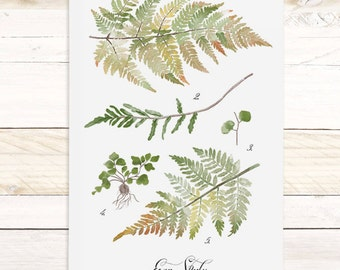 Fern Study - Haven Collection / Watercolor botanical wall hanging, wood trim art. Scientific Canvas Posters Chart Vol.2 More Options HF105
