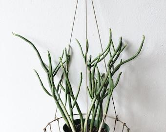 Vintage Minimalist Hanging Planter - brass, modern