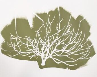Fog Tree in Moss